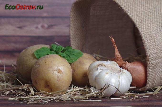 Как хранить картофель в квартире зимой, чем обработать