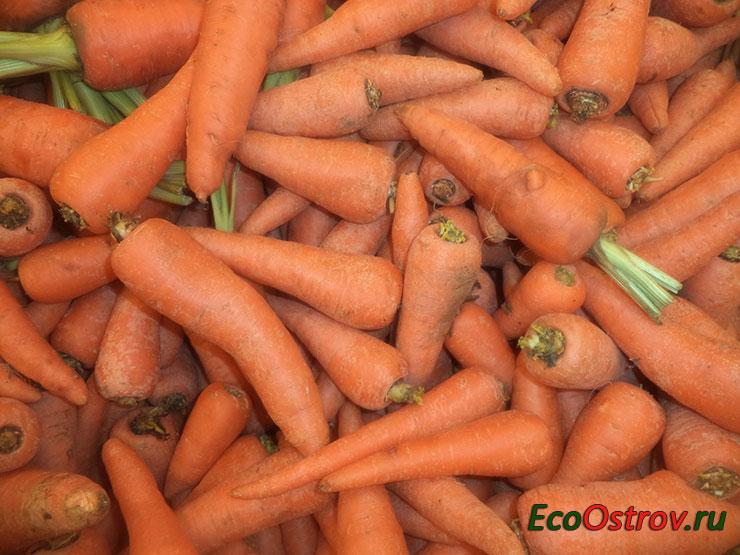Как лучше хранить морковь