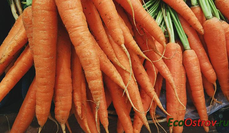 Правила уборки моркови с грядки - когда нужно убирать на хранение