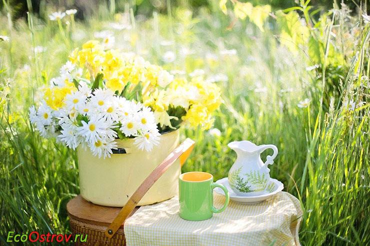 Чай из ромашки - полезные свойства, лечебные свойства ромашки